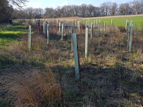 Tree planting and woodland creation